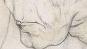 Albrecht Durer mother as giraffe (Detail 2)