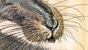 Young Hare after Albrecht Dürer (Detail 2)