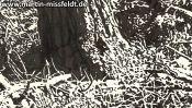 Brandenburg forest floor (Detail 4)