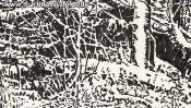 Forest in Lobetal (nature drawing) (Detail 1)