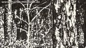 Forest in Lobetal (nature drawing) (Detail 2)