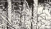 Forest in Lobetal (nature drawing) (Detail 4)