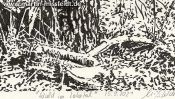 Forest in Lobetal (nature drawing) (Detail 5)