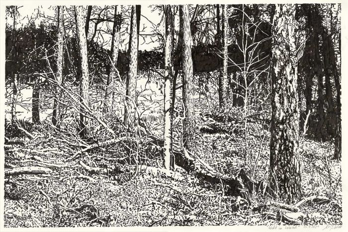 Forest in Lobetal (nature drawing)