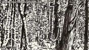 Forest near Chorin, brush pen drawing (Detail 2)