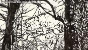 Forest near Chorin, brush pen drawing (Detail 3)