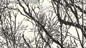 Forest near Chorin, brush pen drawing (Detail 4)