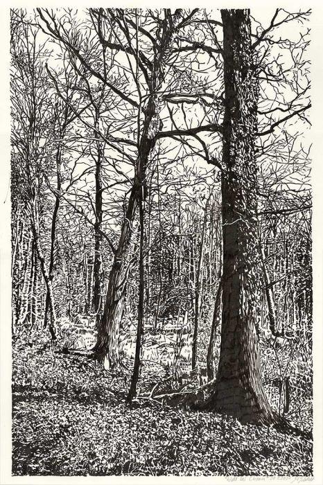 Forest near Chorin, brush pen drawing