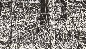 Forrest near Chorin II (ink drawing) (Detail 2)