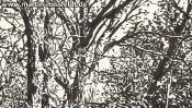 Forrest near Chorin II (ink drawing) (Detail 3)