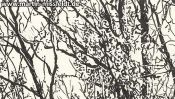 Forrest near Chorin II (ink drawing) (Detail 4)