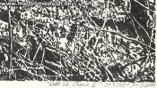 Forrest near Chorin II (ink drawing) (Detail 5)