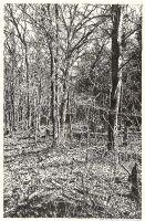Forrest near Chorin II (ink drawing)