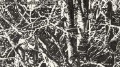 Lobetal forest edge (drawing) (Detail 2)