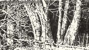 Lobetal forest edge (drawing) (Detail 3)