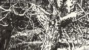 Lobetal forest edge (drawing) (Detail 4)