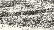 Lobetal forest edge (drawing) (Detail 5)