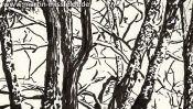 Lobetal trees (brush pen drawing) (Detail 1)