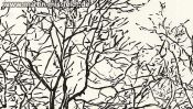 Lobetal trees (brush pen drawing) (Detail 2)