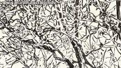 Lobetal trees (brush pen drawing) (Detail 3)