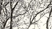 Lobetal trees (brush pen drawing) (Detail 4)