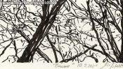 Lobetal trees (brush pen drawing) (Detail 5)