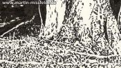 Tree in Lobetal (Brush Pen Drawing) (Detail 3)