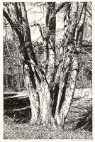 Tree in Lobetal (Brush Pen Drawing)