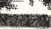 Wukensee (Brush-Pen-Drawing) (Detail 1)