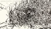 Wukensee (Brush-Pen-Drawing) (Detail 4)