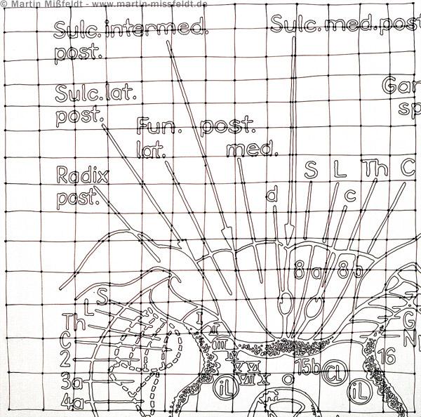 Neuro drawing