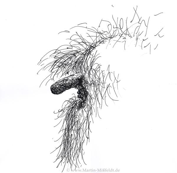 Beard Drawings Ruebezahl His Beard