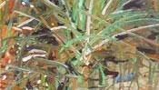 Oil grass on wet ground