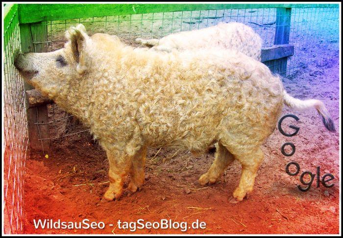Wild Pig Seo-Contest