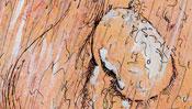 Leonardo da Vinci Portrait (Detail 3)