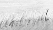 Landscape pencil drawing - Detail 2