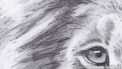 Lions Head (realistic pencil drawing) (Detail 2)
