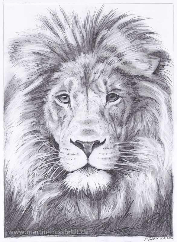 Lions Head (realistic pencil drawing)