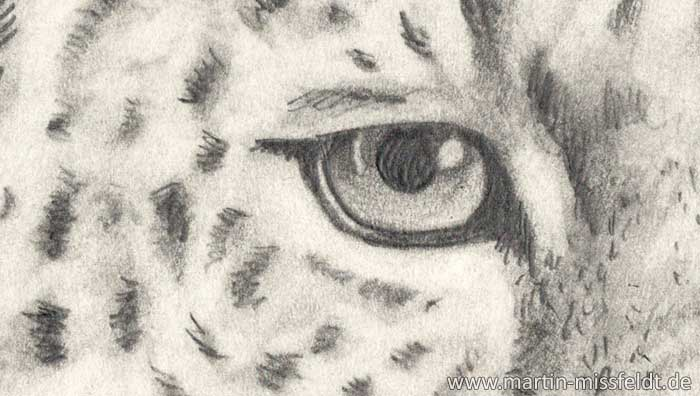 Pencil drawing leopard (how to draw animals) (Detail 1)