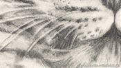 Pencil drawing leopard (how to draw animals) (Detail 4)