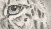 Pencil drawing leopard (how to draw animals) (Detail 5)