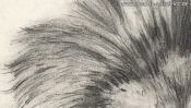 Pencil drawing of a lion (2nd version) (Detail 3)