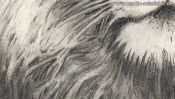 Pencil drawing of a lion (2nd version) (Detail 4)