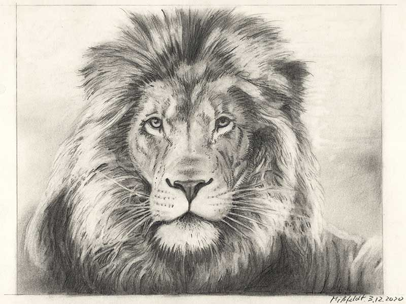 Pencil drawing of a lion (2nd version)