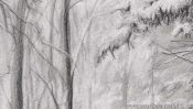 Pencil drawing snow landscape: snowy forest (Detail 4)