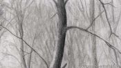 Pencil drawing snow landscape: snowy forest (Detail 5)