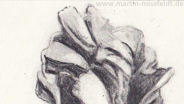 Pencil drawing of a Tulip (Detail 1)