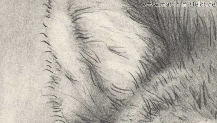 Wolf pencil drawing (Detail 1)