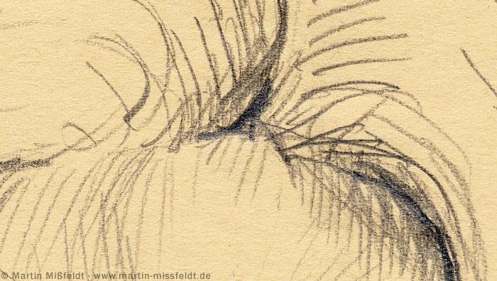 Hair picture detail by martin missfeldt