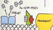 GTP - PDE